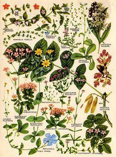 The Concise British Flora in Colour. #england, #british, #flowers