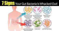 Some people don't realize that not all bacteria is bad. Good bacteria can help improve your digestion and keep your stomach working properly. If you don't have enough good bacteria you may notice that you have frequent upset stomachs, your brain might not work properly, or you could have vitamin...