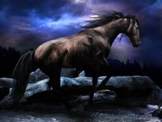 Arabian Horse Wallpapers 1920×1080 Horse Pictures | Adorable Wallpapers