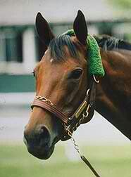 Serena's Song (1992-) was sired by Rahy out of Imaginary; Grandsire: Blushing Groom; Damsire: Northfields. She had a fine racing record of 18 wins in 38 starts (18-11-3) and was the 1995 American Champion 3-Year-Old Filly. She won 17 graded stakes races including 11 Grade 1; among her victories were the Santa Anita Oaks, Black-Eyed Susan Stakes, Beldame Stakes, Santa Monica Handicap and the Pimlico Distaff. Serena's Song was inducted into the Hall of Fame in 2002.