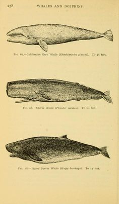 Field book of giant fishes, - Biodiversity Heritage Library