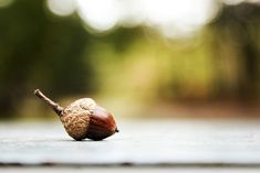 This shows a shallow depth of field because the forest is clearly blurred while the acorn is in focus. Focal Point Photography, Depth Of Field Photography, Macro Photography Tips, Autumn Photography, Photography Classes, Digital Photography, Life Photography, Deep Depth Of Field, Field Camera