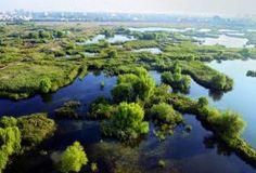 Roumanie, delta de Vacaresti à Bucarest Rome, Water, Outdoor, Bucharest, Romania, Wayfarer, Gripe Water, Outdoors, Outdoor Games