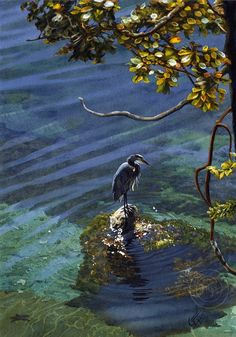 Patience Watercolor Print by Carl Evans The stately form of a Great Blue Heron is illuminated in sunlight as it stands stock still, alert and watching… patiently waiting.