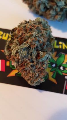 Mango Kush combines the beautiful and uplifting Mango sativa with Hindu Kush. Mango Kushs sweet aroma from the actual tropical fruit along with banana undertones with Kush's classic sour, earthy, piney note make this to be a great high.  #mangokush #mango #kush #buyweedonline #ronaldmcchronald