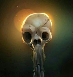 Skulls Skeltons & Reapers
