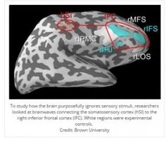 New Findings on How the Brain Ignores Distractions - pinned by @PediaStaff – Please Visit ht.ly/63sNtfor all our pediatric therapy pins