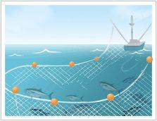 Tuna fishing: Purse Seining