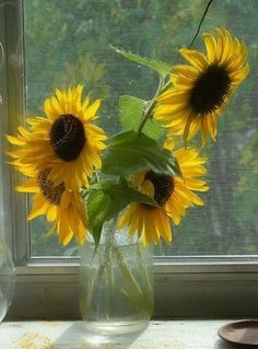 Love arranging flowers from our garden as table decorations ~ and taking photos too! I adore sunflowers, they are such happy flowers. Happy Flowers, My Flower, Fresh Flowers, Beautiful Flowers, Summer Flowers, Bouquet Champetre, Sunflowers And Daisies, Paintings Of Sunflowers, Sunflower Bouquets