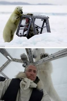 Wow! This is the terrifying moment when a wildlife cameraman comes face-to-face with a deadly 1,000 lb. polar bear looking for its next meal. The hungry eight-foot predator repeatedly attacks the safety perspex box-on-ice equivalent of a shark cage housing helpless Gordon Buchanan.    Filmmaker Mr. Buchanan shows nerves of steel as he endures the lethal polar bear's 40-minute sustained assault as it desperately hunts for a weak spot in his protective pod.