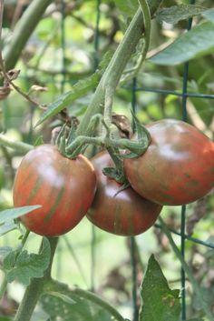 Get Real: Edible Gardening Basics