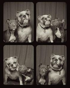 Adorable Photo Booth Images of Rescued Pit Bulls - My Modern Metropolis