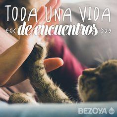 Toda una vida de encuentros. #bezoya, mascota, gato, amistad, amigos, friendship, frases