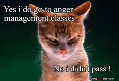 Anger Management - Daily Funny Cat Pictures from funnycatsite.com