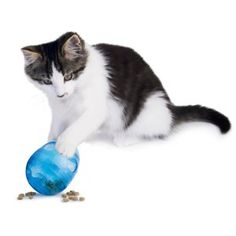 Top 10 cat toys to get for the holidays | Dr. Justine Lee | Dr. Justine Lee Cat Lover Gifts, Cat Gifts, Cat Lovers, Designer Dog Clothes, Catnip Toys, Interactive Toys, Cat Feeding, Dog Carrier, Buy A Cat