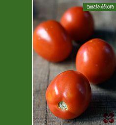 tomate-debora-(leticia-massula-para-cozinha-da-matilde)