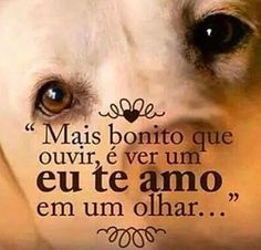 ❤️❤️❤️ #cachorro  #amoanimais  #amocachorro