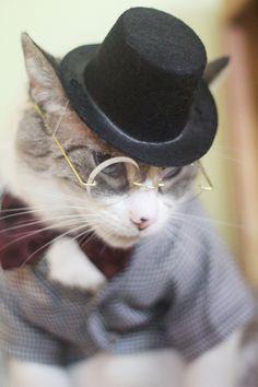 ..dapper gentleman cat