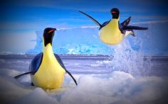 #penguins #ice #ocean #awsm scenery