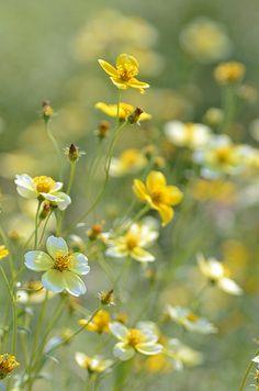Field wild flowers ✿⊱╮