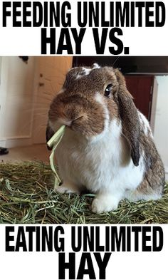 How do you know if your animal is actually EATING enough hay?