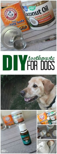 DIY Toothpaste for Dogs using Essential Oils! Puppy breath, doggie breath, Mouth Health for Pets. Homemade Recipe for Your dog for a fresh breath and mouth.