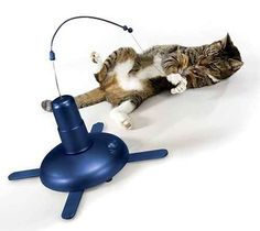 This tantalizing motion-activated cat toy.