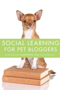 Pinterest - Social Learning for Pet Bloggers