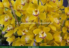 """Beautifull orchids.  Check www.tuinschilderijen.nl and hit the botton """"flowers"""""""
