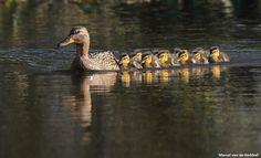 Vogelbescherming Nederland         .. Met dank aan Marcel van de Kerkhof!