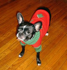 So sweet! Do you dress up your family #pets for the Holidays/cold?