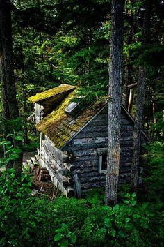 Cabin in Yosemite