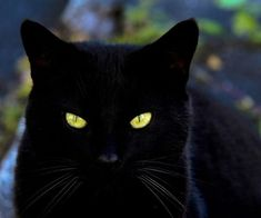 Black cat with very golden eyes...