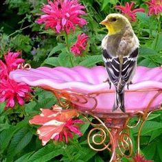 ##BIRD* - samra hasan - Google+