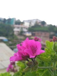 Violet beauty