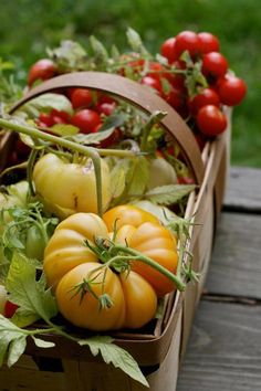 How To Start A Sustainable Garden