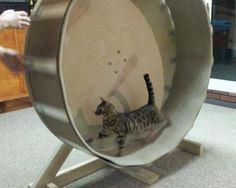 Home Made Cat Wheel | Stitches n' Sews Here is a DIY for a kitty tread mill!!!