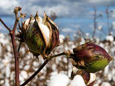 organic cotton, Japan, India, Business Call to Action, United Nations, UN, United Nations Development Programme, Itochu, Kurkku, eco-fashion, sustainable fashion, green fashion, ethical fashion, sustainable style