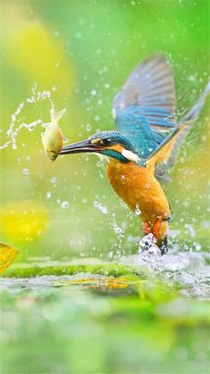 All Animals flug All Animals Pretty Birds, Beautiful Birds, Animals Beautiful, Common Kingfisher, Kingfisher Bird, Exotic Birds, Colorful Birds, Wildlife Photography, Animal Photography