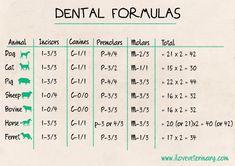 teeth, animals, dental formulas