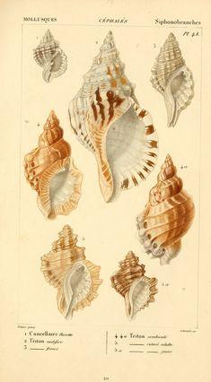 1828?-1830 shell chart