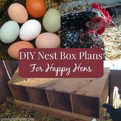 Free DIY nest box plans for your chicken coop! Using only one sheet of plywood, these nest boxes are simple to construct. Keep your hens happy and laying lots of eggs with proper nest boxes! Chicken Coop Garden, Chicken Coop Plans Free, Chicken Coop Pallets, Mobile Chicken Coop, Chicken Feeders, Best Chicken Coop, Building A Chicken Coop, Chicken Coops, Chicken Tractors