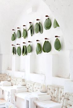 hanging cacti on a white wall