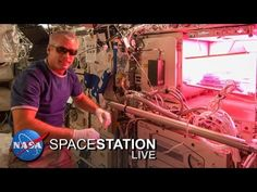 Space Station Live: Lettuce Look at Veggie - YouTube