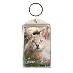 Key Chain: Little Cat Photo - Jungle Cat