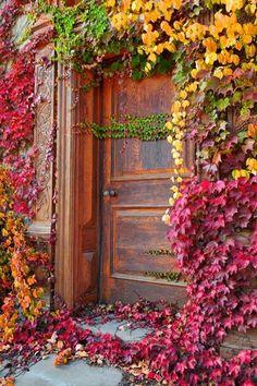 Ivy. Door to old winery.
