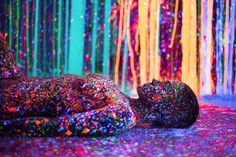 Photographer Alex Markow's series Lost in Infinity Split, is inspired by the work of Magnus Sodamin, Infinity Split. The Miami-based artist covered the bodies of two women with paint and captured them in a similar background. The result is an enchanting collection of images that draw the viewer through their bright colors and beautiful compositions.