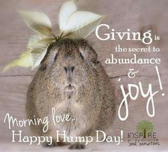 Please feel free to pin all that your heart desires! Wednesday Greetings, Wednesday Humor, Wednesday Morning, Sunday, Karma, Good Morning Funny, Its Friday Quotes, Daily Thoughts, Cute Images
