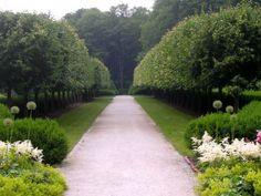 Linden trees - Edith Wharton's The Mount