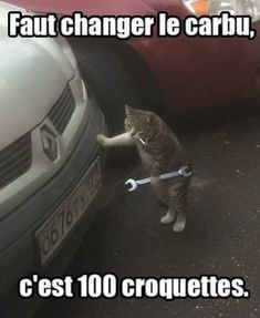 "Here's collection of some ""Top New Cat Memes"" that will make you happy and funny for whole day and maybe for whole week. Just read out these ""Top New Cat Memes"" and keep enjoy and also share with your friends. Top New Cat Memes Top New Cat Memes Top… Funniest Cat Memes, Funny Animal Memes, Cute Funny Animals, Funny Cute, Funny Shit, Hilarious, Funny Images, Funny Pictures, Funny Pics"